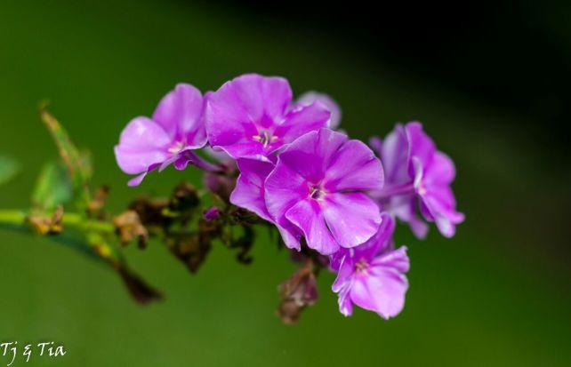 Purple Delicacy